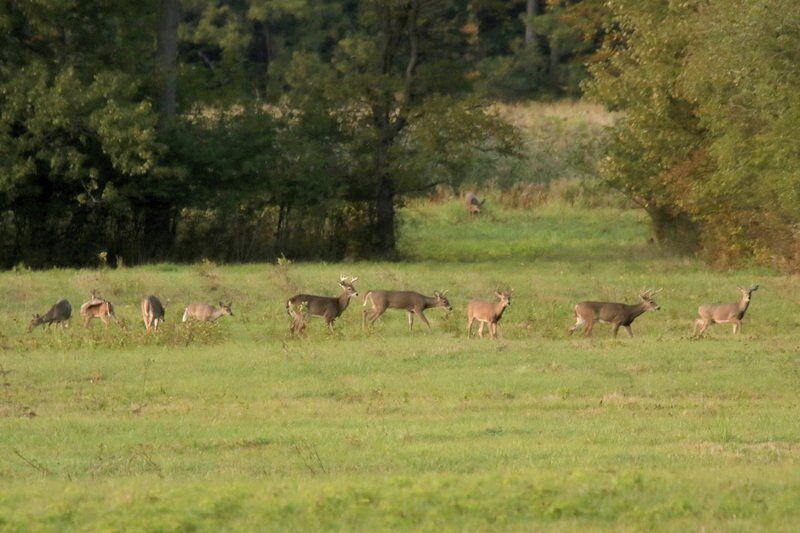 THE GREAT OUTDOORS: Oh, deer! 'Tis the season for increased vigilance.