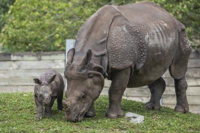 Buffalo Zoo's newest rhino name to make debut