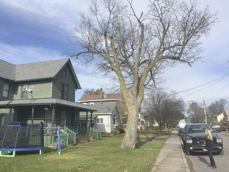 Residents fed up with tree complaint backlog