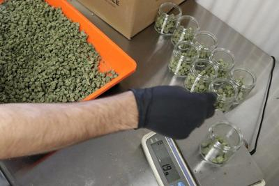 Marijuana health claims lure patients as science catches up
