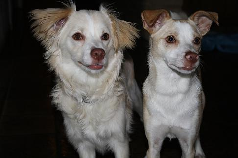 Charlie and Joshie Lookin' for a Home