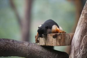 Lodi goes nuts for Squirrel Appreciation Day