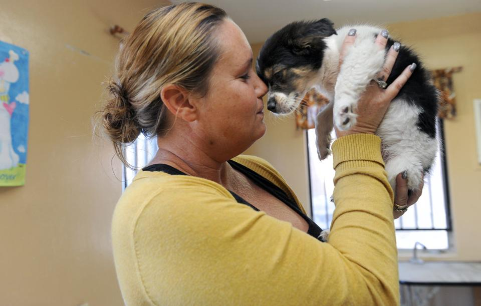Puppy left in bag hanging from Lodi shelter doorknob