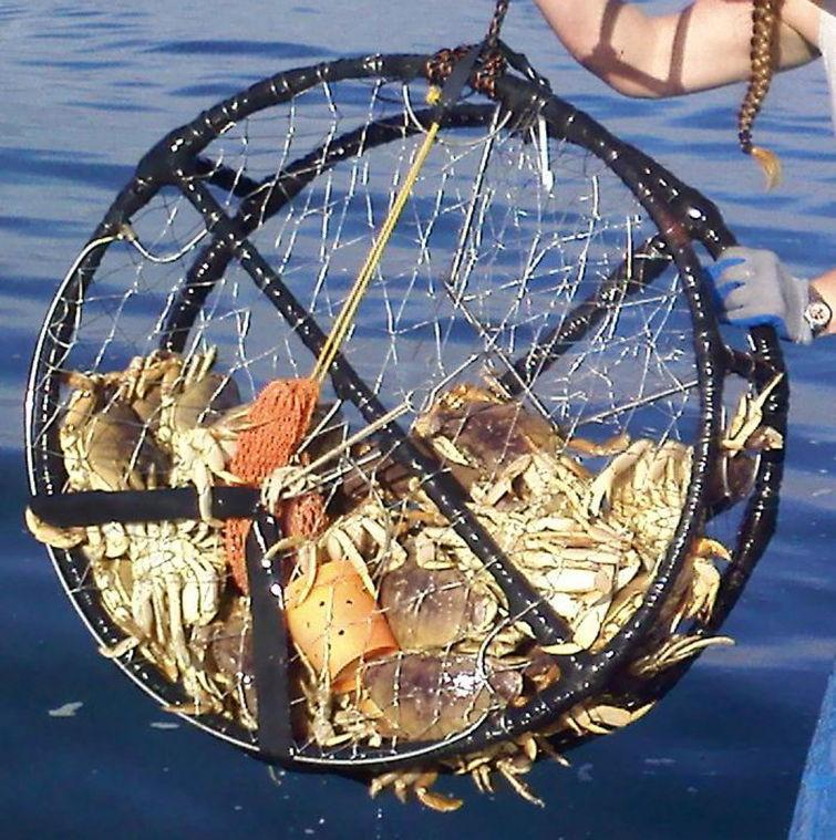 Catch crab and enjoy a crab-themed dinner at the Mendocino Crab Festival