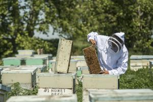 Pavel Vykhrestov is the bee master