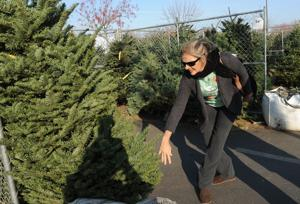 Christmas tree business rebounds after drought