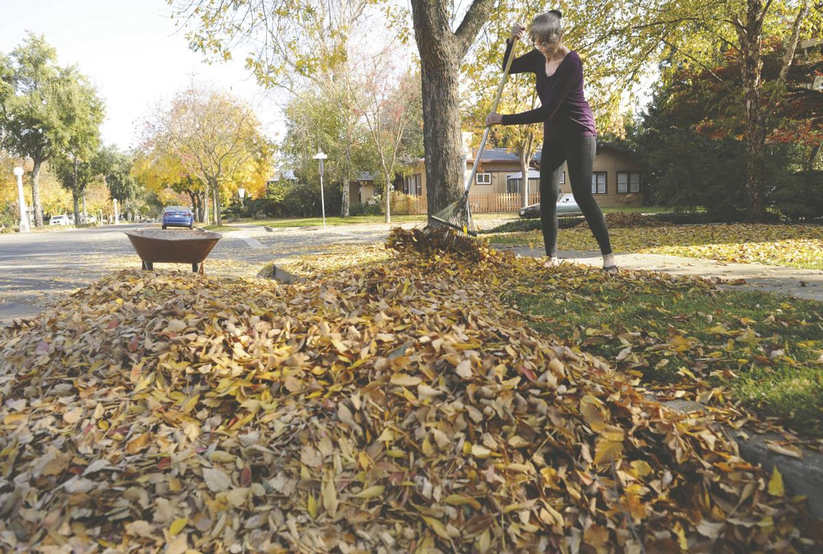 Lodi leaf removal to run from Dec. 2 to Jan. 14