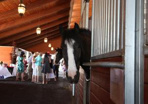 Kentucky Derby West raises funds for Hospice of San Joaquin