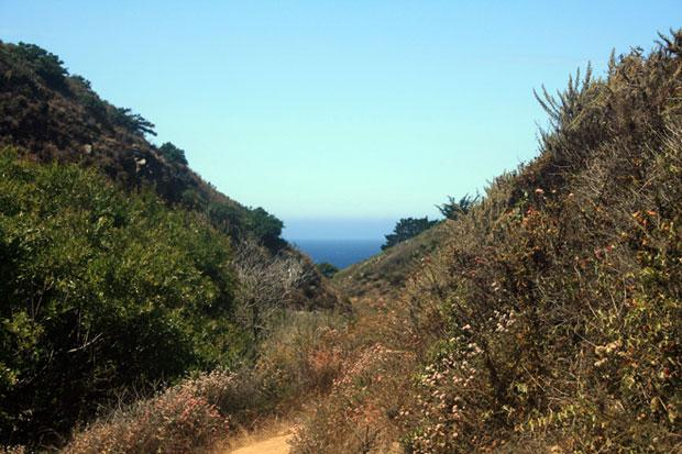 Hike through groves of redwoods at Garrapata State Park
