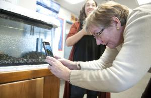 Local students can watch salmon hatch