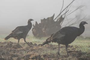 Lodi-area hunting enthusiasts serve Thanksgiving bird the old-fashioned way