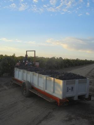 A full load of Borra Vineyards Merlot