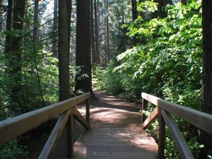 Walk through big trees, see wild animals at Big Trees Family Day