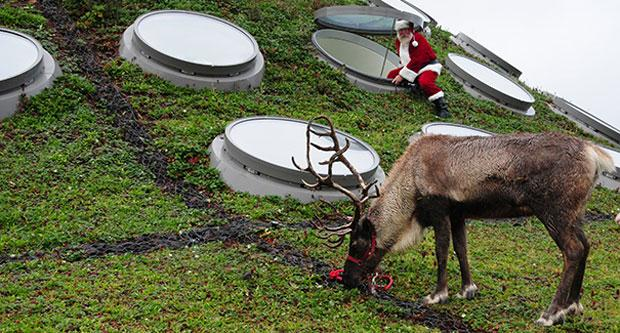 Play in the snow with reindeer at California Academy of Sciences
