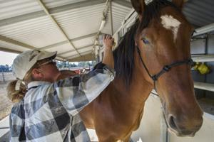 Acampo trainer Jill Knoll takes horsing around seriously