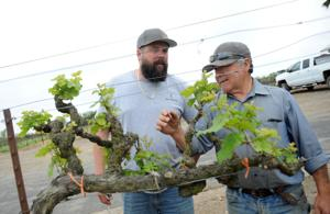 From pruning to picking: Mannas provide 'one-stop shopping' for growers