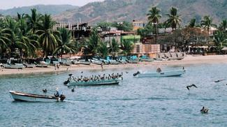 Pelicans of Mexico