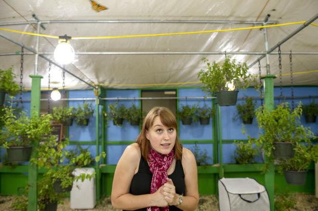 News-Sentinel reporter faces her greatest fear at Lodi Grape Festival exhibit