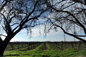 Tour of Albariño comes to Lodi wineries this weekend