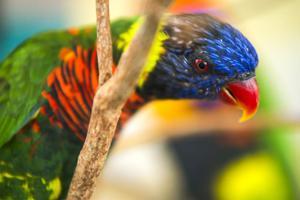Micke Grove Zoo