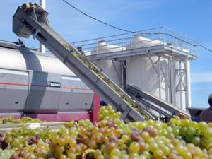 Loading Borra Chardonnay into Van Ruiten's Press