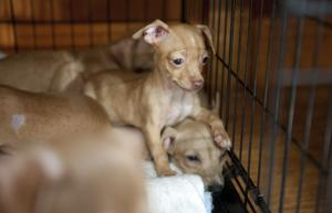 Puppies rescued after being dumped in river