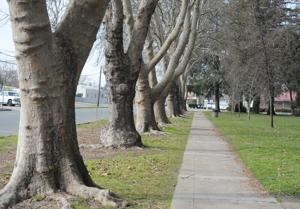 Lodi's Lawrence Park could be temporarily fenced off