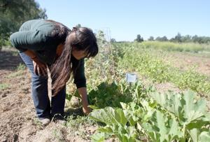 Local garden offers learning opportunity, feeds those in need