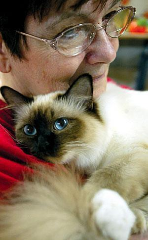 Contestants, judges look to find the 'purrfect' feline at Lodi cat show