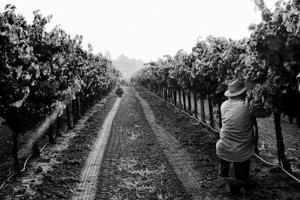 Lockeford's Charlene Martin left the corporate world to teach farmworkers English, delve into photography
