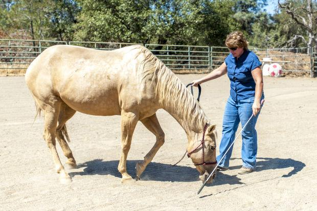 Cowgirl Up Ranch helps women reach empowerment by working with horses