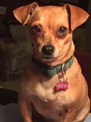 Tail-Waggers for March 17, 2018: Penny Lane