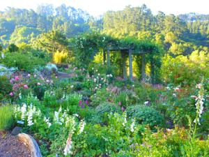 Visit California Botanical Garden at Berkeley for relaxing and learning