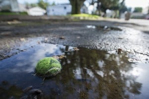 Residents Of Two Streets In Lodi Say No To Adding Sidewalks, Storm Drains: A tennis ball floats in a puddle of standing water on Willow Street in Lodi on  Tuesday, Nov. 20, 2012. The Lodi City Council decided not to add gutters, curbs and sidewalks to Willow and Peach streets during a meeting later that day.  - Dan Evans/News-Sentinel