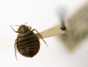 Lodi Stadium 12 remains closed to address bug infestation