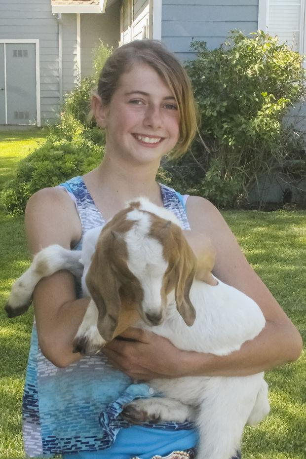 Area 4-H, FFA members get their animals ready for the San JoaquinFair