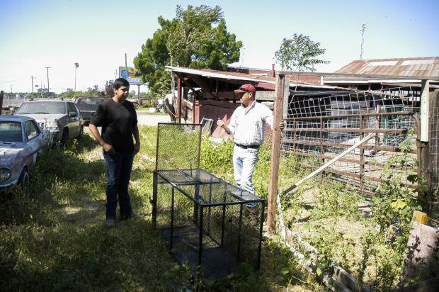 Deputies search French Camp for vicious dogs
