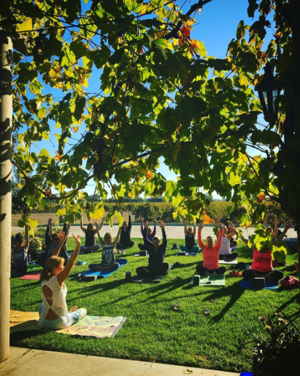Yoga in the Vines brings practice, wine together