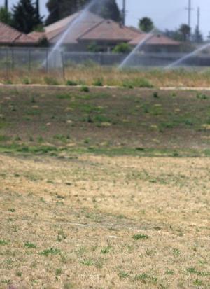 DeBenedetti Park moving forward despite brown weeds