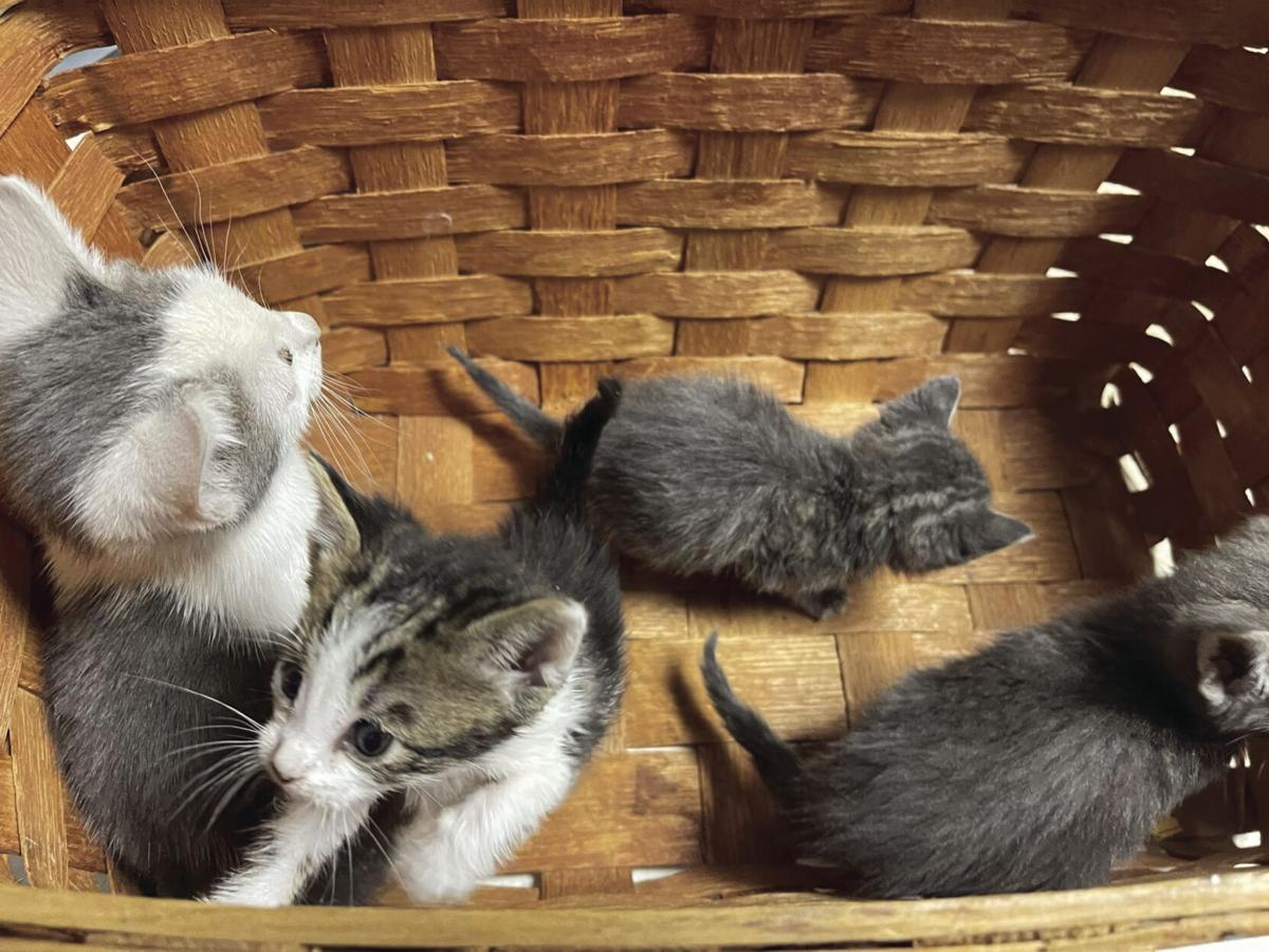 Cuteness overload: Lodi animal shelter asks residents to stop dumping cats, kittens