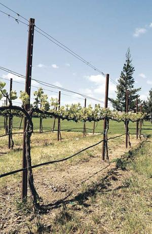 Connecting with winemakers