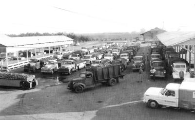 Vintage View: Busy 1955 grape crush at Liberty Winery