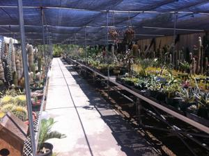 Find Prickly plants at Poots House of Cactus