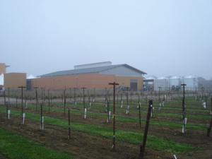 The Robert Mondavi Institute's new winery