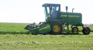 Alfalfa harvest helps feed local dairy