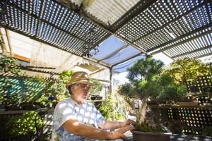 Merry Sasaki helps nurture a garden of trees into skillfully designed bonsai