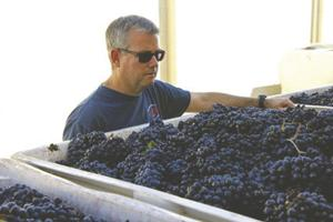 Lodi Winegrape Commission names executive director