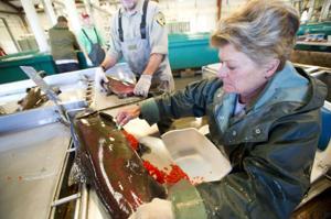 Local agencies work to boost number of trout, salmon in Mokelumne River