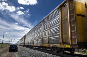 Person struck, killed by train in Lodi