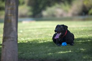 As days heat up, Lodi residents scramble to keep pets cool